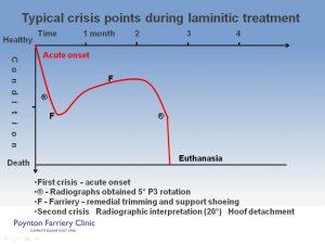 Laminitis - typical crisis slide 1
