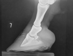 X-ray before trimming (left fore).