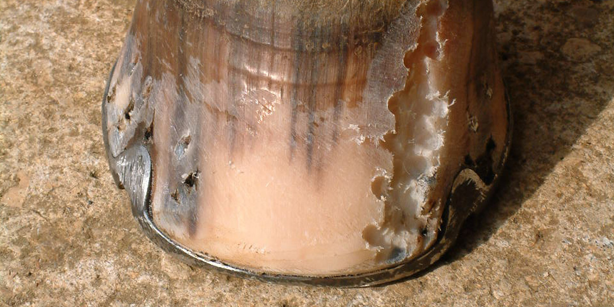 Hoof Crack Repair